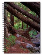 Big Sur Redwood Canyon Spiral Notebook