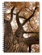 Big Tree Spiral Notebook