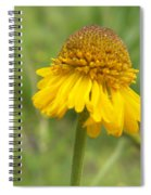 Bigelow Spiral Notebook