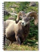 Bighorn 1 Spiral Notebook