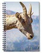 Bighorn In Yellowstone Spiral Notebook