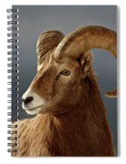 Bighorn Sheep In Winter Spiral Notebook