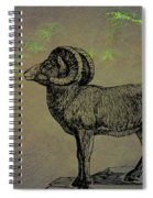 Bighorn Sheep  Spiral Notebook