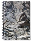 Bighorns Romantic Stare Spiral Notebook