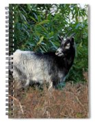 Kerry Mountain Goat Spiral Notebook
