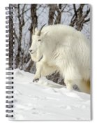 Billy Goat On The Move Spiral Notebook