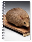 Bioengineered Obese Mouse, 1998 Spiral Notebook