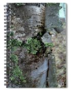 Birch Bark 1 Spiral Notebook