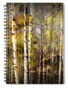 Birch Bark And Trees Abstract Spiral Notebook
