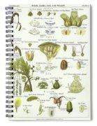 Birch, Hazel, Oak, And Willow Spiral Notebook