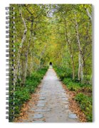 Birch Pathway Perspective Spiral Notebook