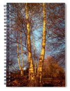 Birch Tree In Golden Hour Spiral Notebook