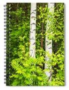Birch Tree Panorama Spiral Notebook