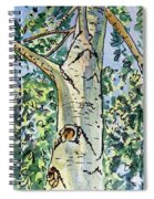 Birch Tree Sketchbook Project Down My Street Spiral Notebook
