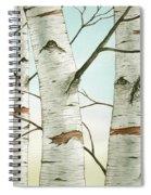 Birch Trees In Late Autumn Spiral Notebook