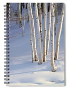 Birch Trees In The Snow, South Spiral Notebook