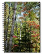 Birches In Fall Forest Spiral Notebook