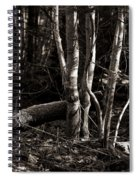 Birches In The Wood Spiral Notebook