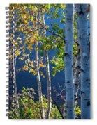 Birches On Lake Shore Spiral Notebook