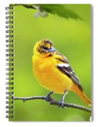 Bird And Blooms - Baltimore Oriole Spiral Notebook