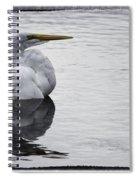 Bird Bath 4619 Spiral Notebook