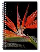 Bird In Flight Vivid Colors Spiral Notebook