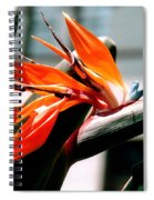 Bird Of Paradise 2 Spiral Notebook