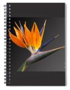 Bird Of Paradise #3 Spiral Notebook