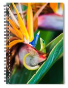 Bird Of Paradise Gecko Spiral Notebook