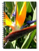 Bird Of Paradise Spiral Notebook