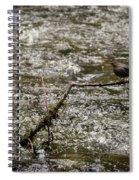 Bird On A River Spiral Notebook