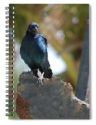 Bird On An Anchor Spiral Notebook