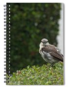 Bird On The Hedges Spiral Notebook