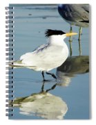 Bird - Tern - Reflection Spiral Notebook
