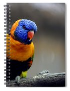 Birds 27 Spiral Notebook