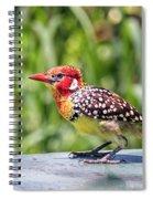 Birds #62 Spiral Notebook