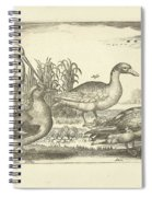 Birds In The Reeds, Adriaen Collaert, 1659 Spiral Notebook