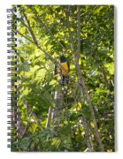 Birds Inside The Coba Ruins Spiral Notebook