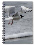 Birds Of A Feather 5 Spiral Notebook