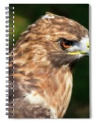Birds Of Prey Series 5 Spiral Notebook