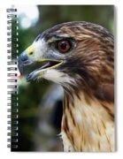 Birds Of Prey Series Spiral Notebook
