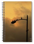 Birds On A Post Amber Light Square Spiral Notebook