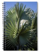 Bismarckia Spiral Notebook