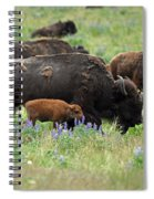 Bison And Lupine Spiral Notebook
