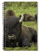 Bison Bliss Spiral Notebook