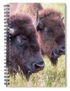 Bison Closeup View Spiral Notebook