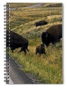 Bison Disrupting Traffic Spiral Notebook