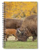 Bison Family Nation Spiral Notebook