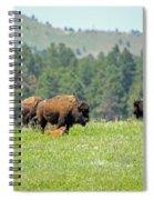 Bison Herd Spiral Notebook