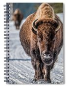 Bison In The Road - Yellowstone Spiral Notebook